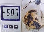 抗酸化力の高い食べ物 黒豆の酸化還元電位
